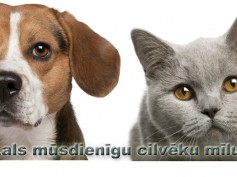 Dāvināšanas laiks sācies arī veikalā – veterinārajā aptiekā mīluļiem.lv